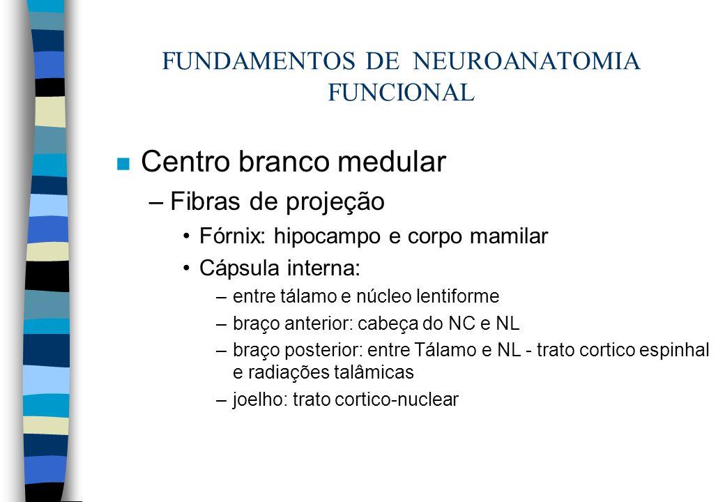 n Centro branco medular –Fibras de projeção Fórnix: hipocampo e corpo mamilar Cápsula interna: –entre tálamo e núcleo lentiforme –braço anterior: cabe