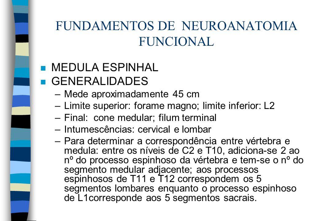 FUNDAMENTOS DE NEUROANATOMIA FUNCIONAL n MEDULA ESPINHAL n GENERALIDADES –Mede aproximadamente 45 cm –Limite superior: forame magno; limite inferior: