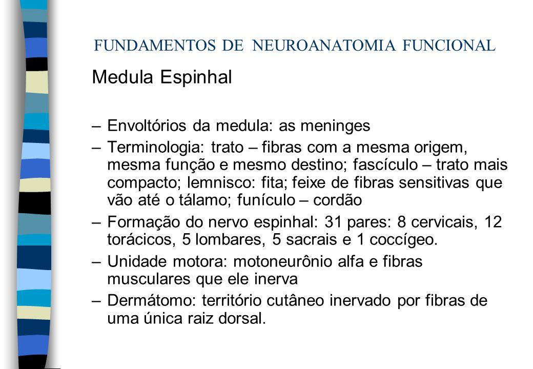 FUNDAMENTOS DE NEUROANATOMIA FUNCIONAL Medula Espinhal –Envoltórios da medula: as meninges –Terminologia: trato – fibras com a mesma origem, mesma fun