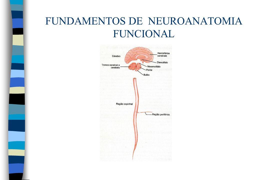 FUNDAMENTOS DE NEUROANATOMIA FUNCIONAL n Estrutura –Anterior: tubérculo anterior –Posterior: pulvinar –Aderência intertalâmica –Corpos geniculares