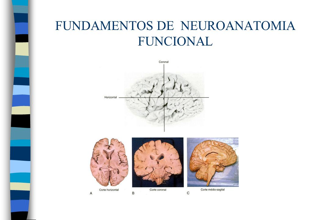 FUNDAMENTOS DE NEUROANATOMIAFUNCIONAL n Cerebelo –Estrutura Vermis: mediano Hemisférios: laterais –Cortex –Substância branca –Núcleos: fastigial, globoso, emboliforme Cada hemisfério contola motoneurônios homolatrais