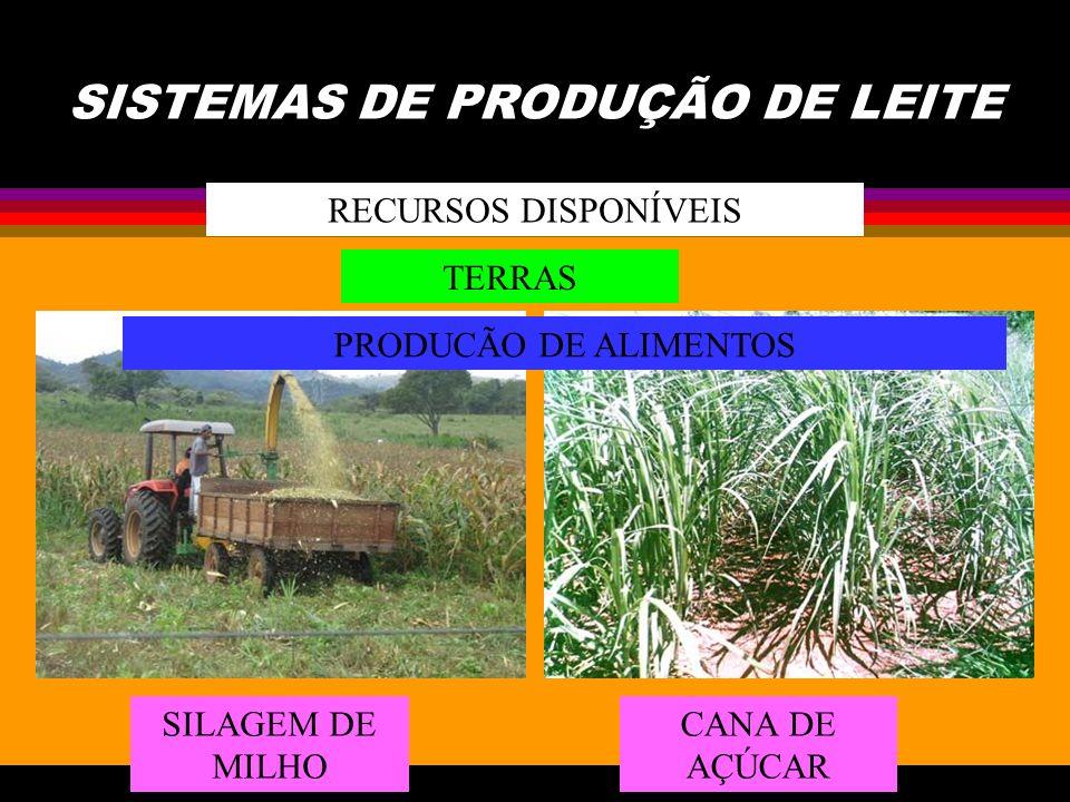 SISTEMAS DE PRODUÇÃO DE LEITE RECURSOS DISPONÍVEIS TERRAS PRODUCÃO DE ALIMENTOS SILAGEM DE MILHO CANA DE AÇÚCAR