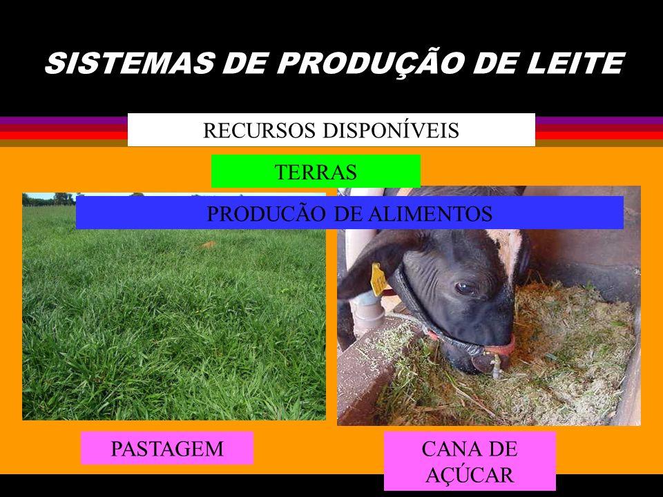 SISTEMAS DE PRODUÇÃO DE LEITE RECURSOS DISPONÍVEIS TERRAS PRODUCÃO DE ALIMENTOS PASTAGEMCANA DE AÇÚCAR