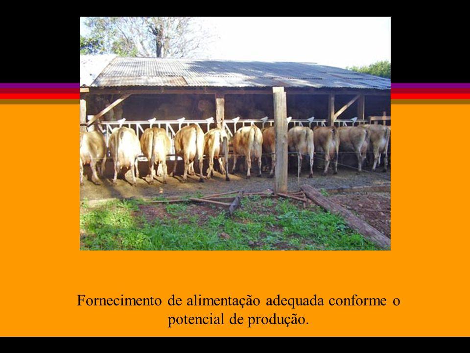 Fornecimento de alimentação adequada conforme o potencial de produção.