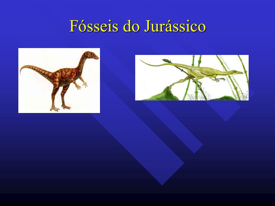 Fósseis do Jurássico