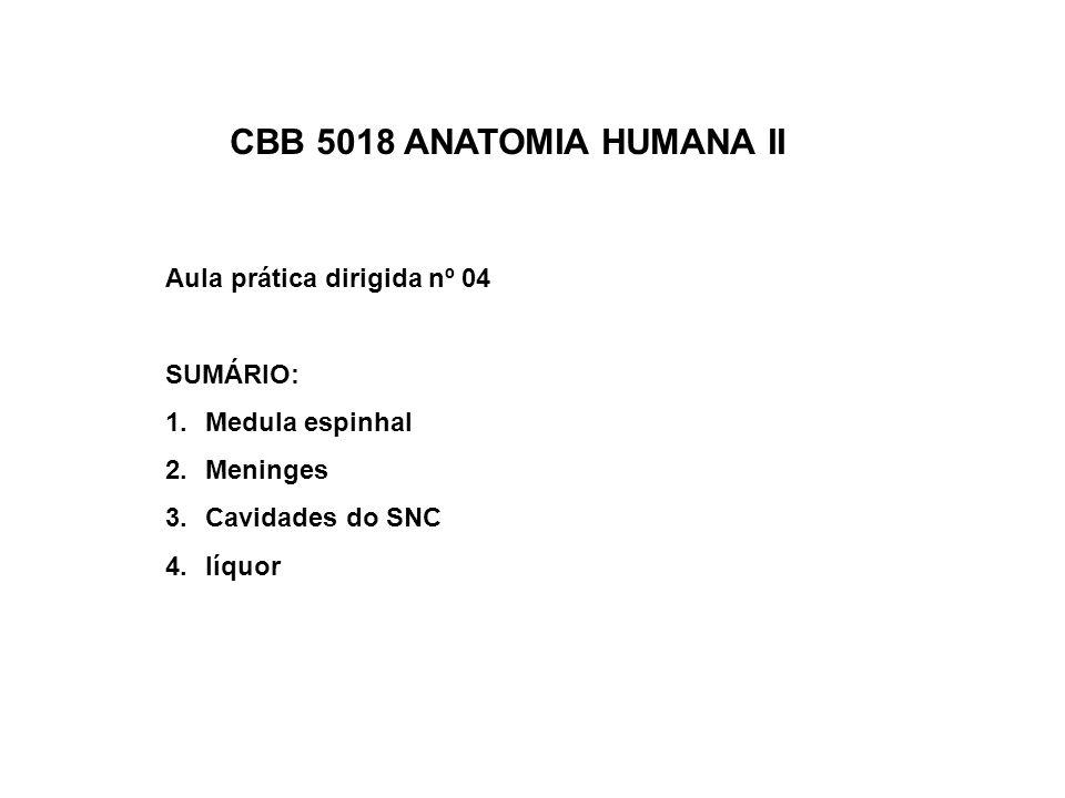 CBB 5018 ANATOMIA HUMANA II Aula prática dirigida nº 04 SUMÁRIO: 1.Medula espinhal 2.Meninges 3.Cavidades do SNC 4.líquor