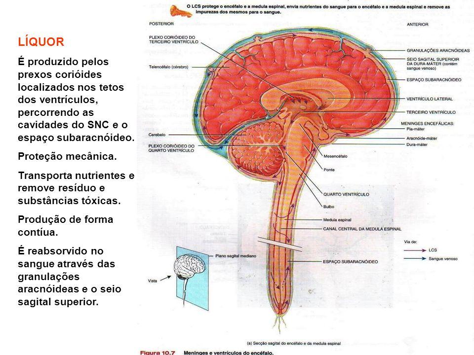 LÍQUOR É produzido pelos prexos corióides localizados nos tetos dos ventrículos, percorrendo as cavidades do SNC e o espaço subaracnóideo. Proteção me