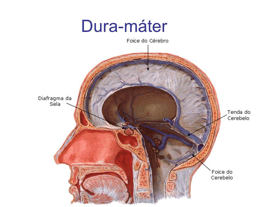 Dura-máter