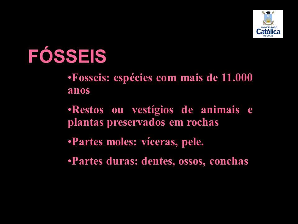 FÓSSEIS Fosseis: espécies com mais de 11.000 anos Restos ou vestígios de animais e plantas preservados em rochas Partes moles: víceras, pele. Partes d