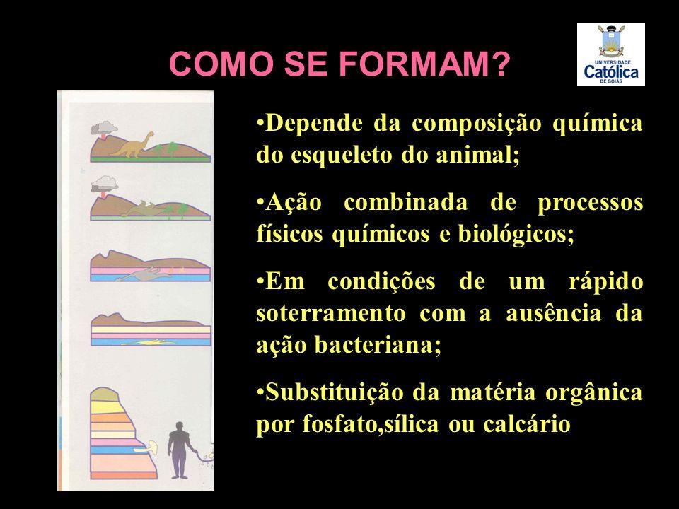 COMO SE FORMAM? Depende da composição química do esqueleto do animal; Ação combinada de processos físicos químicos e biológicos; Em condições de um rá