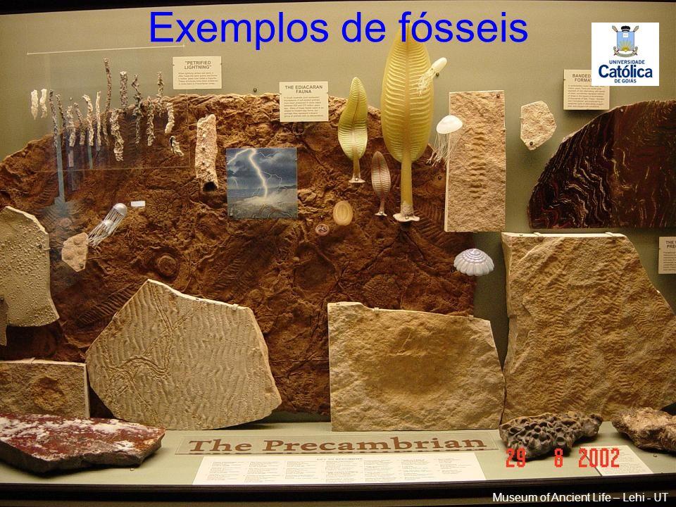 Exemplos de fósseis Museum of Ancient Life – Lehi - UT