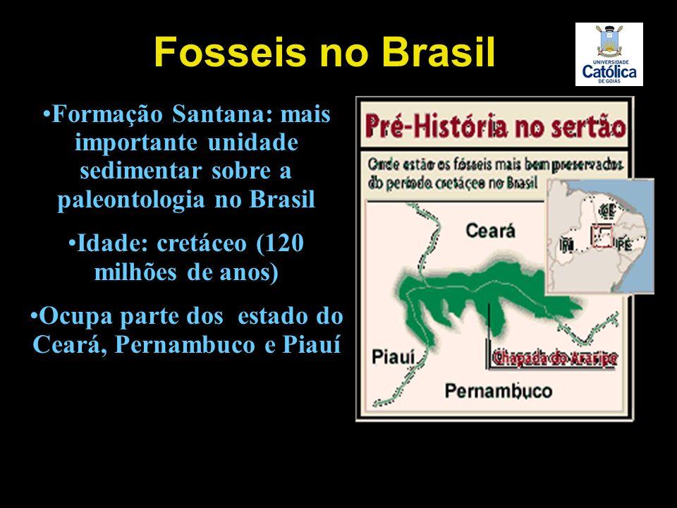 Formação Santana: mais importante unidade sedimentar sobre a paleontologia no Brasil Idade: cretáceo (120 milhões de anos) Ocupa parte dos estado do C