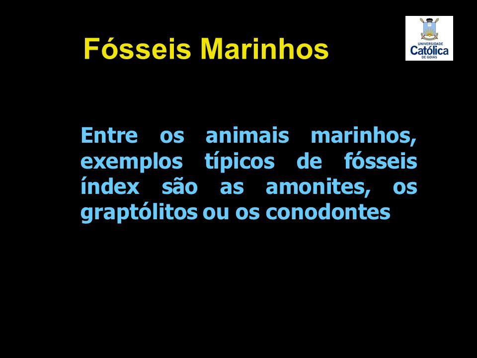 Entre os animais marinhos, exemplos típicos de fósseis índex são as amonites, os graptólitos ou os conodontes Fósseis Marinhos