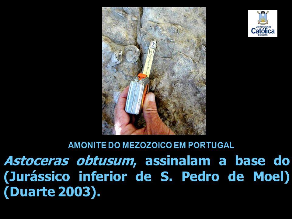 AMONITE DO MEZOZOICO EM PORTUGAL Astoceras obtusum, assinalam a base do (Jurássico inferior de S. Pedro de Moel) (Duarte 2003).