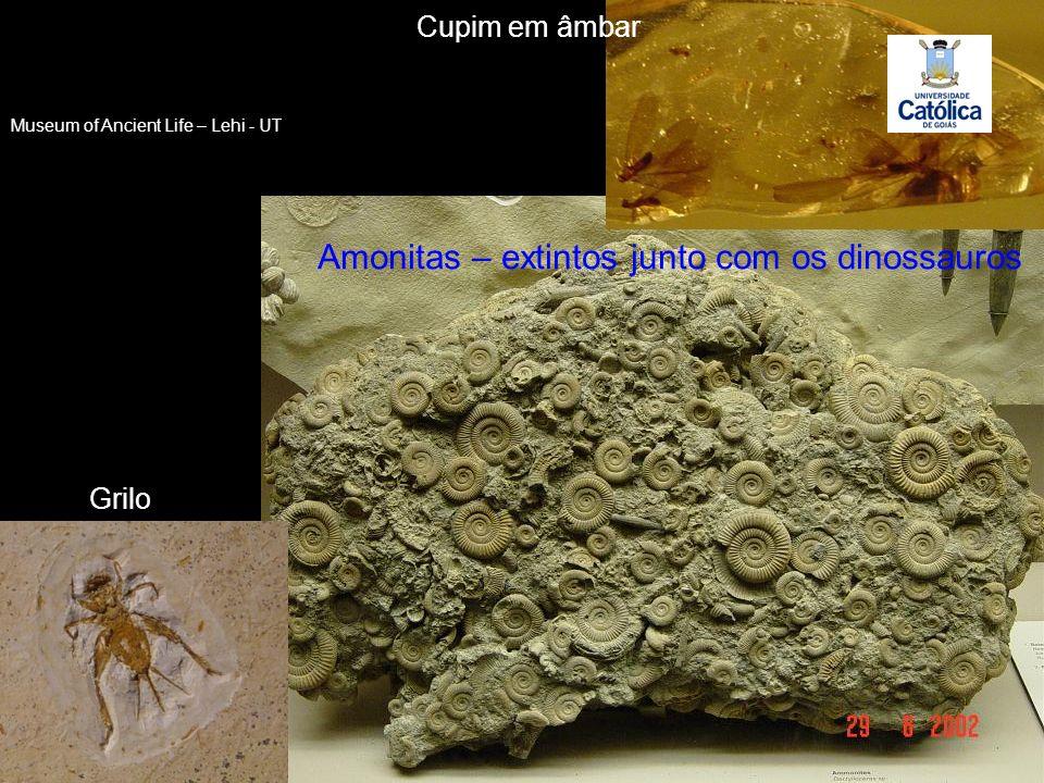 Amonitas – extintos junto com os dinossauros Grilo Cupim em âmbar Museum of Ancient Life – Lehi - UT