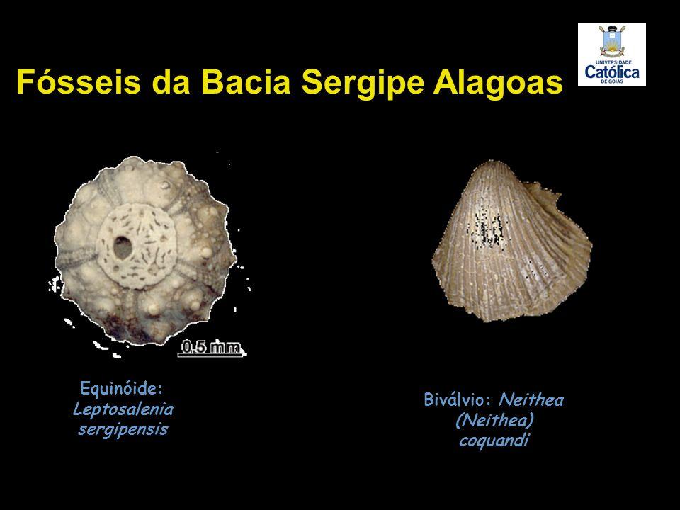 Equinóide: Leptosalenia sergipensis Biválvio: Neithea (Neithea) coquandi Fósseis da Bacia Sergipe Alagoas