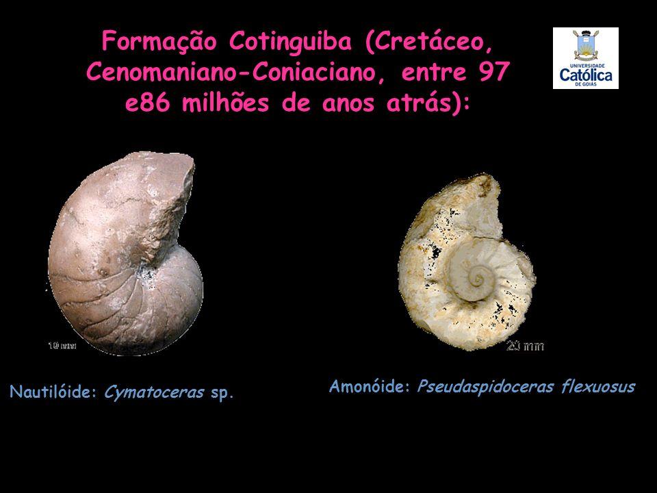 Formação Cotinguiba (Cretáceo, Cenomaniano-Coniaciano, entre 97 e86 milhões de anos atrás): Nautilóide: Cymatoceras sp. Amonóide: Pseudaspidoceras fle