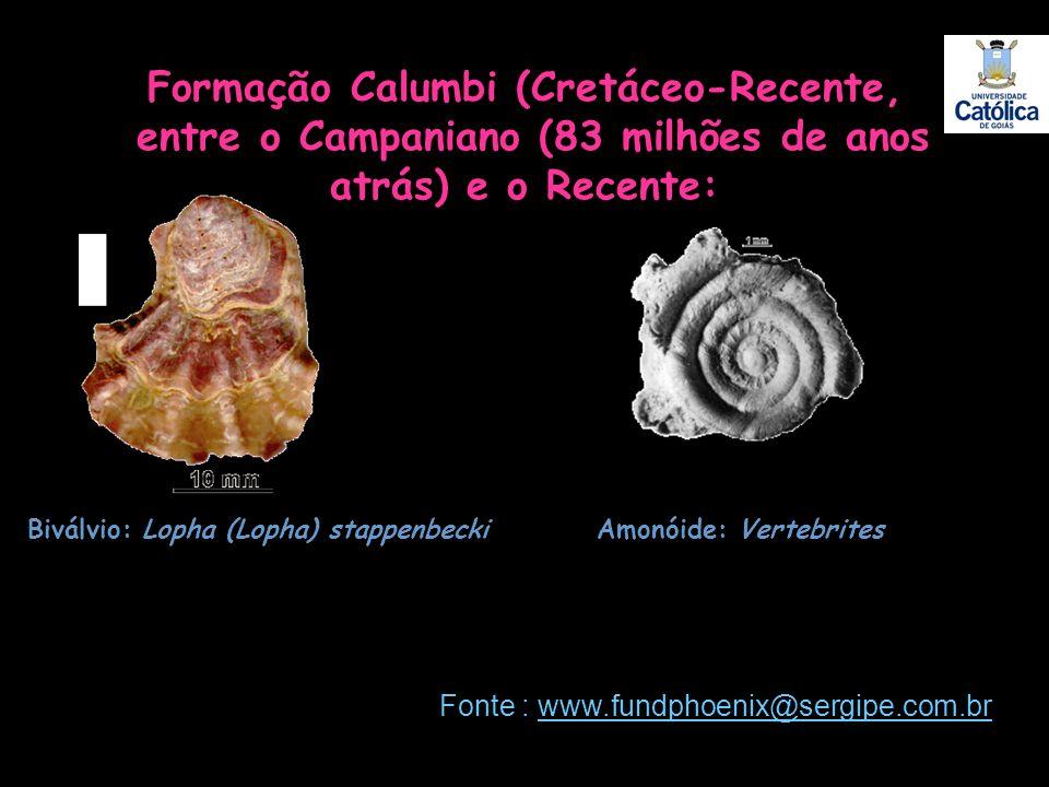 Formação Calumbi (Cretáceo-Recente, entre o Campaniano (83 milhões de anos atrás) e o Recente: Biválvio: Lopha (Lopha) stappenbeckiAmonóide: Vertebrit