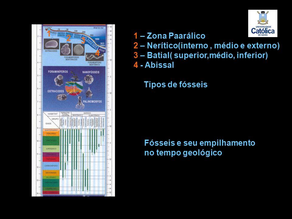 11 1 2 3 4 1 – Zona Paarálico 2 – Nerítico(interno, médio e externo) 3 – Batial( superior,médio, inferior) 4 - Abissal Tipos de fósseis Fósseis e seu