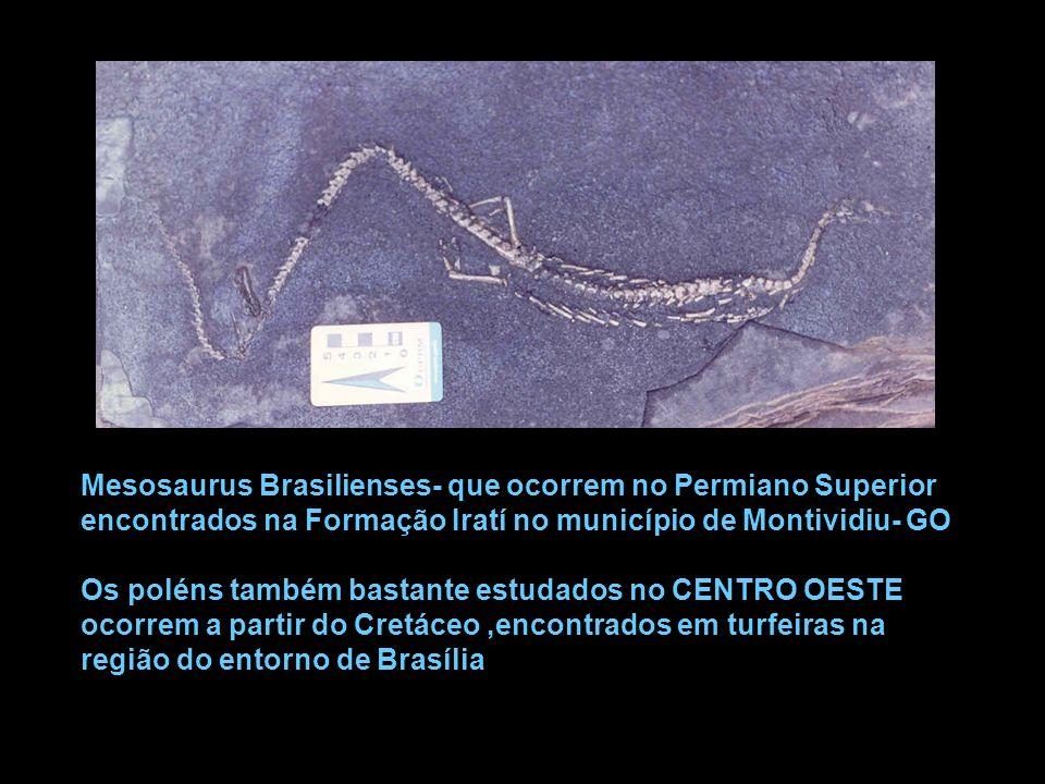 Mesosaurus Brasilienses- que ocorrem no Permiano Superior encontrados na Formação Iratí no município de Montividiu- GO Os poléns também bastante estud