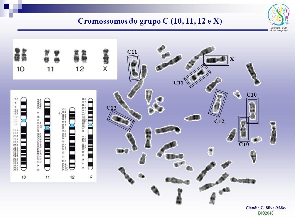 Cláudio C. Silva, M.Sc. BIO2040 Cromossomos do grupo C (10, 11, 12 e X) C10 C12 C11 X