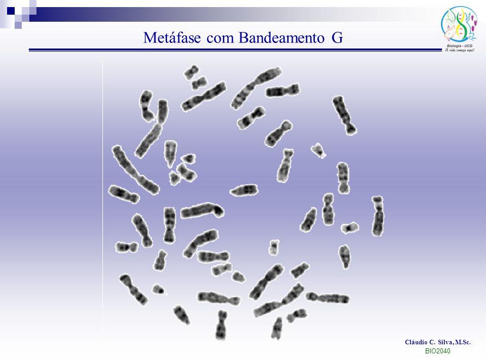 Metáfase com Bandeamento G Cláudio C. Silva, M.Sc. BIO2040