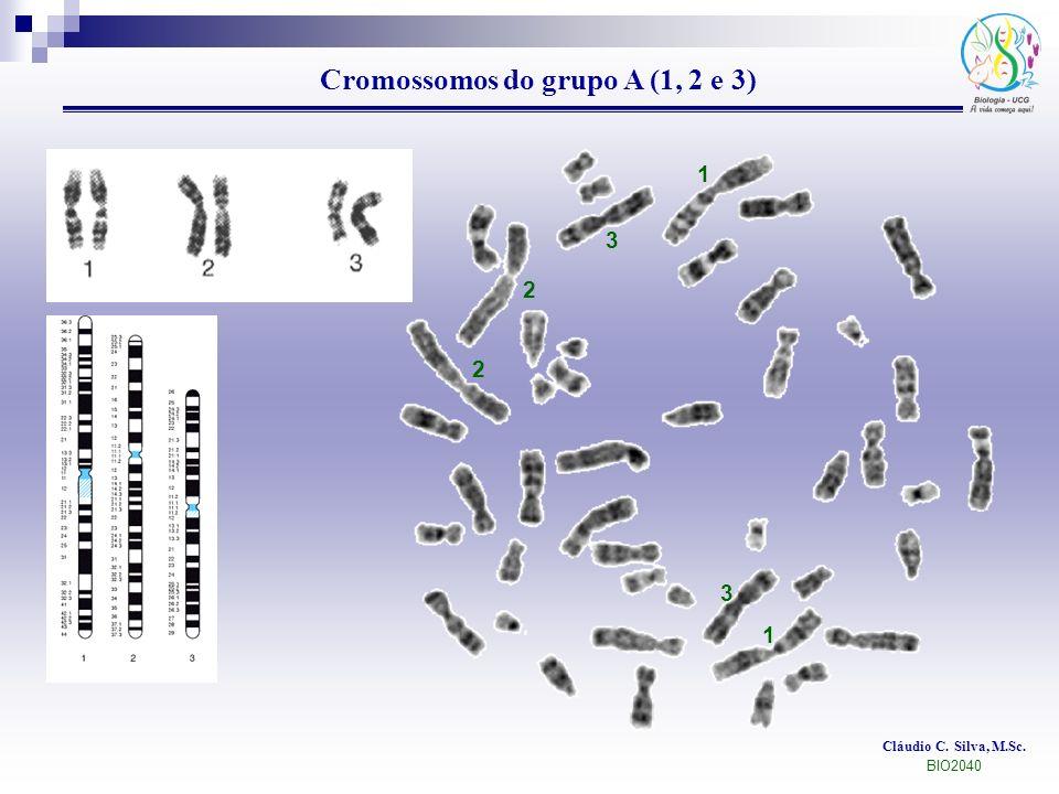 Cláudio C. Silva, M.Sc. BIO2040 Cromossomos do grupo A (1, 2 e 3) 1 1 2 2 3 3