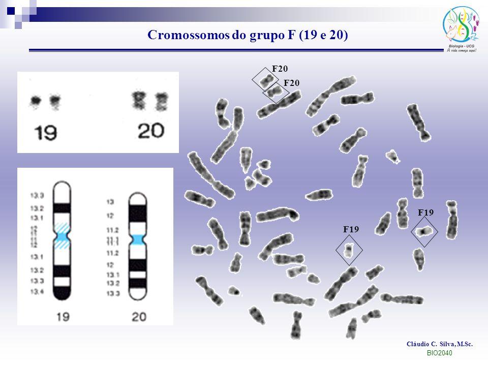Cláudio C. Silva, M.Sc. BIO2040 Cromossomos do grupo F (19 e 20) F20 F19