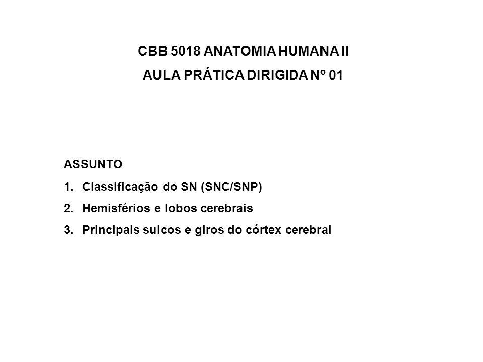 CBB 5018 ANATOMIA HUMANA II AULA PRÁTICA DIRIGIDA Nº 01 ASSUNTO 1.Classificação do SN (SNC/SNP) 2.Hemisférios e lobos cerebrais 3.Principais sulcos e