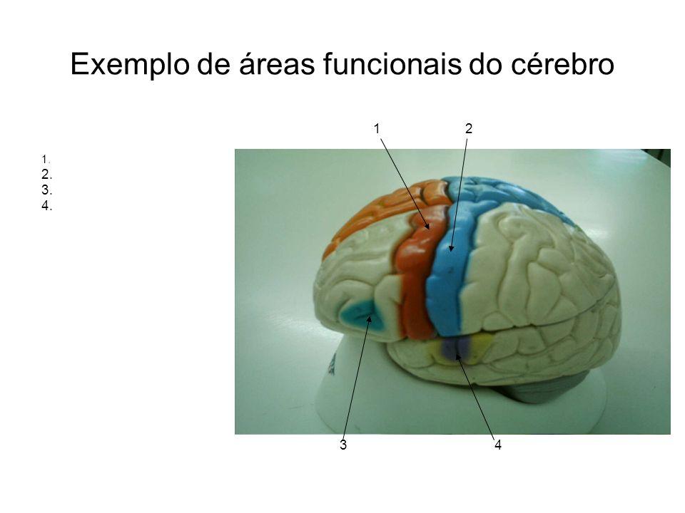Exemplo de áreas funcionais do cérebro 1 2 1. 2. 3. 4. 3 4