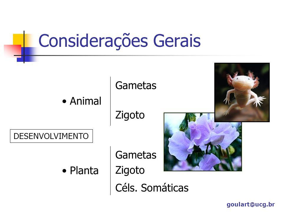 Considerações Gerais Animal Gametas Zigoto Planta Gametas Zigoto Céls. Somáticas DESENVOLVIMENTO goulart@ucg.br