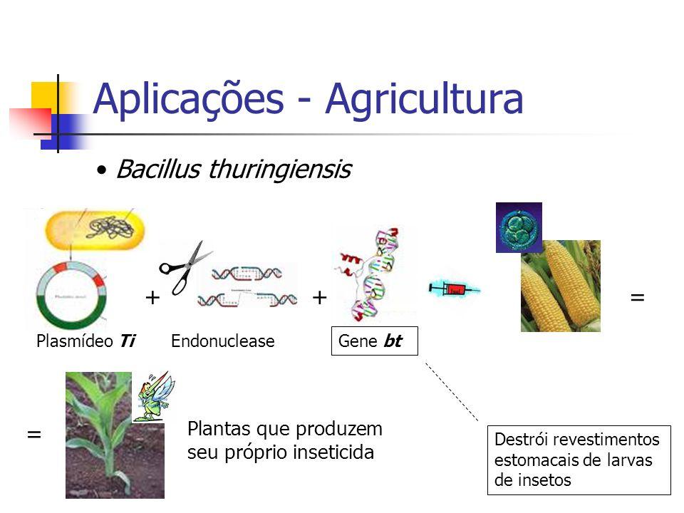 Aplicações - Agricultura Bacillus thuringiensis Plasmídeo TiEndonuclease Gene bt ++ Destrói revestimentos estomacais de larvas de insetos = = Plantas