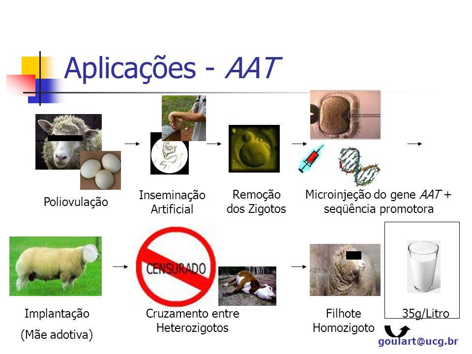 Aplicações - AAT Poliovulação Inseminação Artificial Remoção dos Zigotos Microinjeção do gene AAT + seqüência promotora Implantação (Mãe adotiva) Cruz