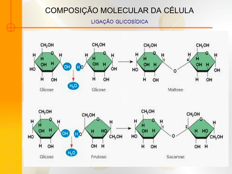 COMPOSIÇÃO MOLECULAR DA CÉLULA LIGAÇÃO GLICOSÍDICA