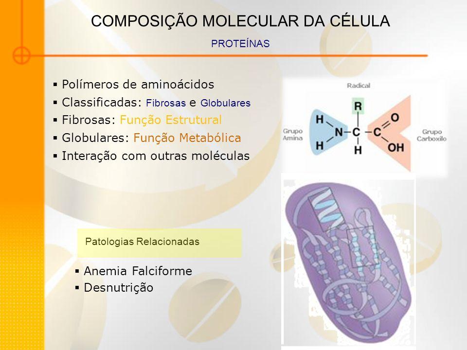 COMPOSIÇÃO MOLECULAR DA CÉLULA PROTEÍNAS Polímeros de aminoácidos Classificadas: Fibrosas e Globulares Fibrosas: Função Estrutural Globulares: Função