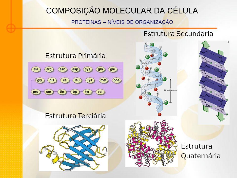 COMPOSIÇÃO MOLECULAR DA CÉLULA PROTEÍNAS – NÍVEIS DE ORGANIZAÇÃO Estrutura Primária Estrutura Secundária Estrutura Terciária Estrutura Quaternária