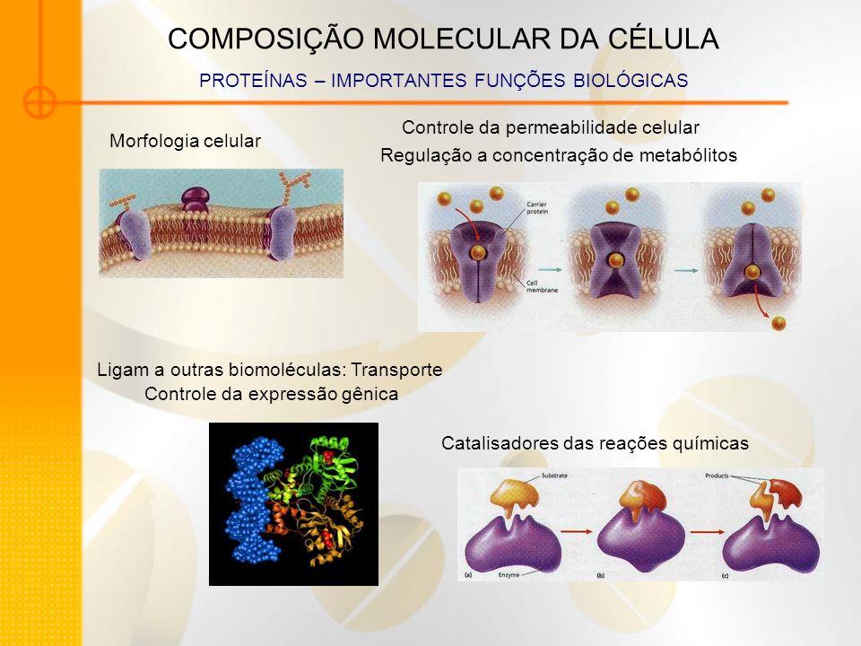 COMPOSIÇÃO MOLECULAR DA CÉLULA PROTEÍNAS – IMPORTANTES FUNÇÕES BIOLÓGICAS Morfologia celular Catalisadores das reações químicas Controle da permeabili