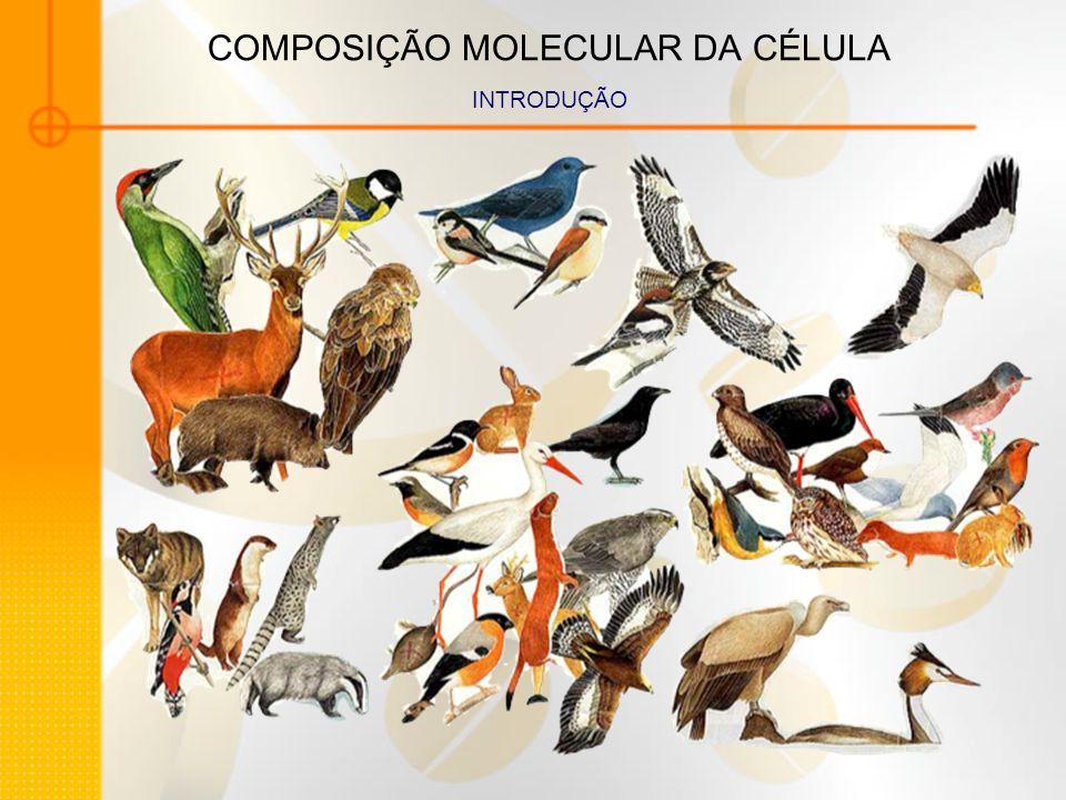 COMPOSIÇÃO MOLECULAR DA CÉLULA CARBOIDRATOS - POLISSACARÍDEOS Amido Glicogênio