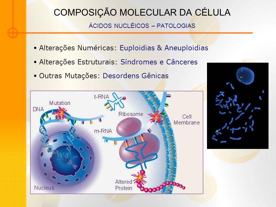 COMPOSIÇÃO MOLECULAR DA CÉLULA ÁCIDOS NUCLÉICOS – PATOLOGIAS Alterações Numéricas: Euploidias & Aneuploidias Alterações Estruturais: Síndromes e Cânce