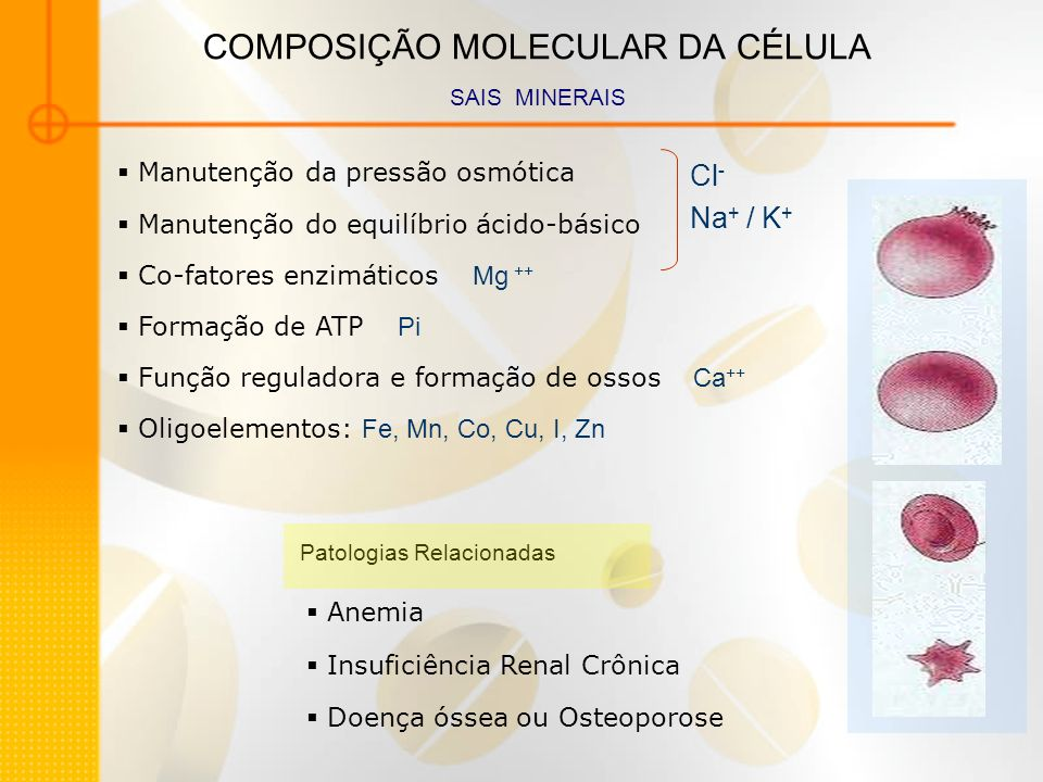COMPOSIÇÃO MOLECULAR DA CÉLULA SAIS MINERAIS Manutenção da pressão osmótica Manutenção do equilíbrio ácido-básico Co-fatores enzimáticos Mg ++ Formaçã