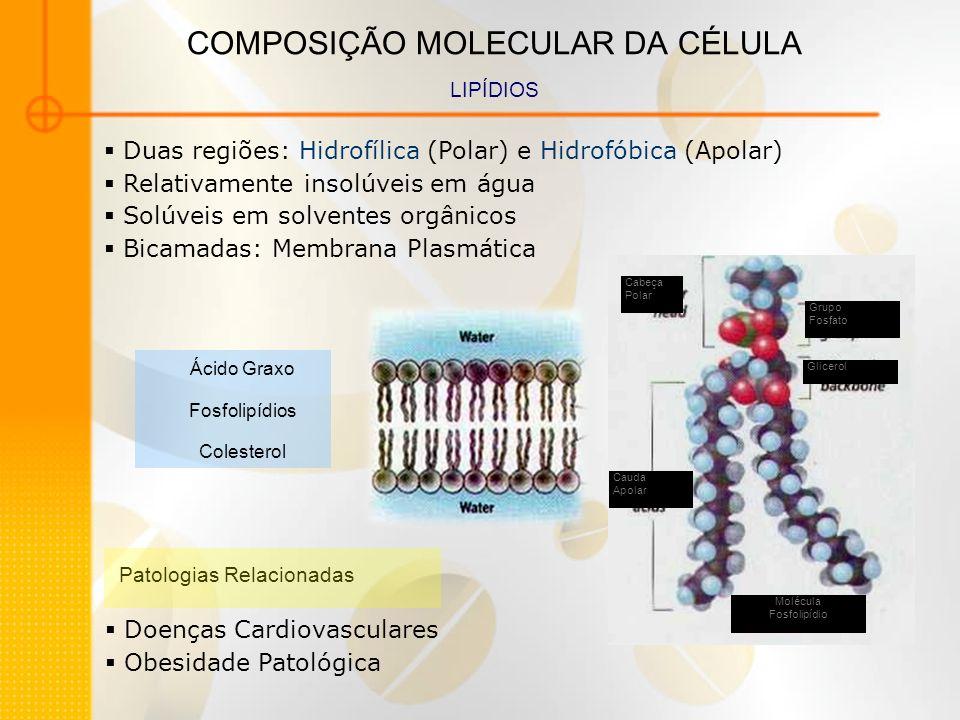 COMPOSIÇÃO MOLECULAR DA CÉLULA PROTEÍNAS – CARBOIDRATOS – ÁCIDOS NUCLÉICOS Polímeros Monômeros ligados covalentemente Importantes Polímeros Celulares Ácidos Nucléicos Polissacarídeos Polipeptídeos