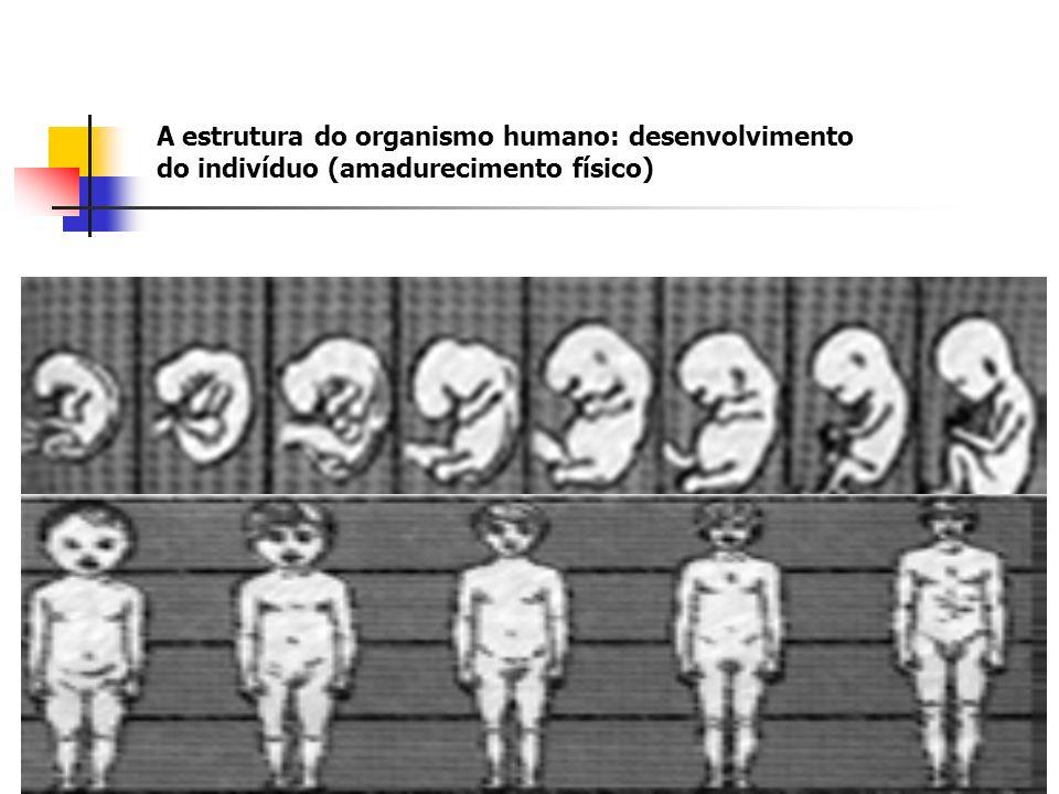 A estrutura do organismo humano: desenvolvimento do indivíduo (amadurecimento físico)