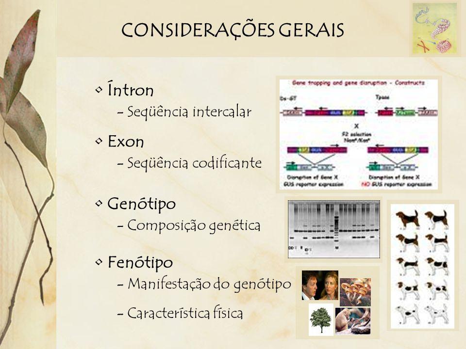 CONSIDERAÇÕES GERAIS Íntron - Seqüência intercalar Exon - Seqüência codificante Genótipo - Composição genética Fenótipo - Manifestação do genótipo - C