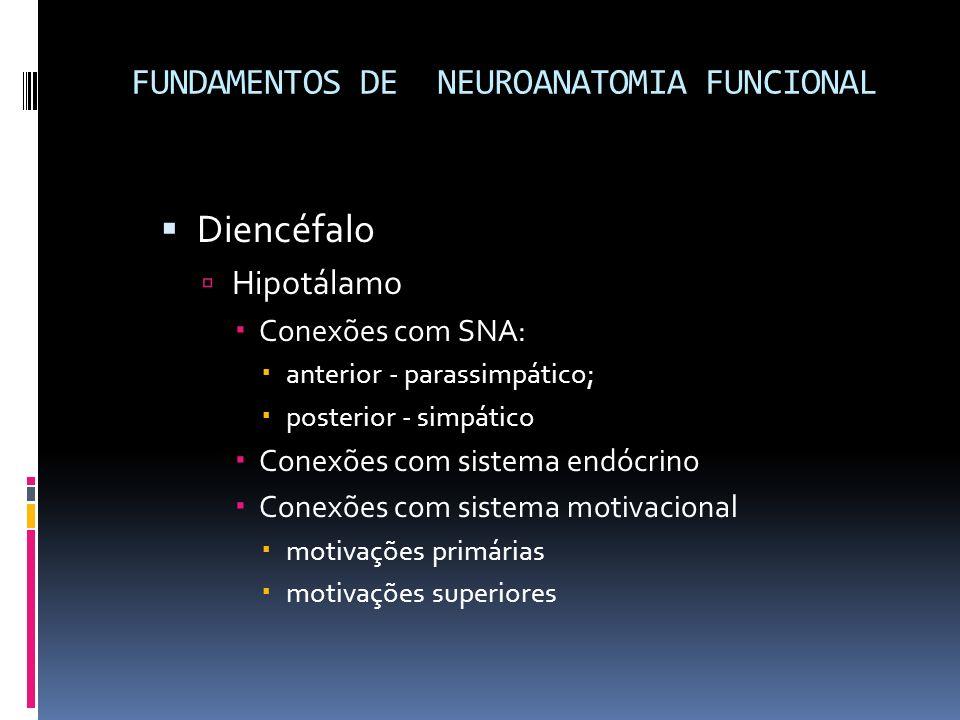 Diencéfalo Hipotálamo Conexões com SNA: anterior - parassimpático; posterior - simpático Conexões com sistema endócrino Conexões com sistema motivacio