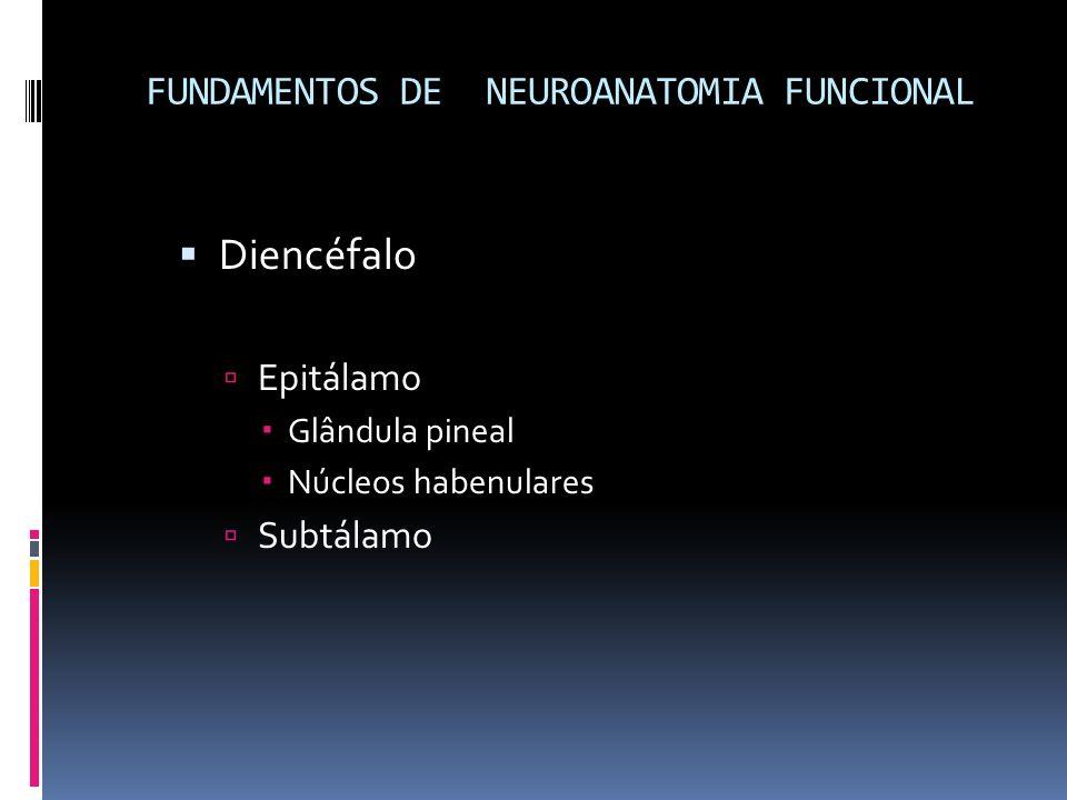 Diencéfalo Epitálamo Glândula pineal Núcleos habenulares Subtálamo