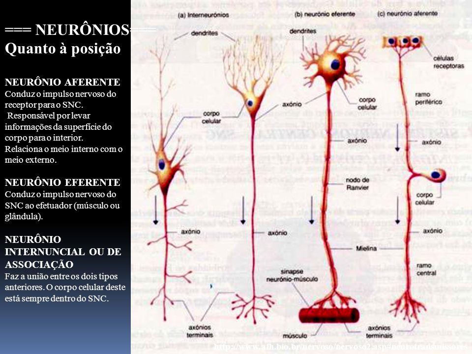 11 http://www.afh.bio.br/nervoso/nervoso2.asp#neurotransmissores === NEURÔNIOS=== NEURÔNIO AFERENTE Conduz o impulso nervoso do receptor para o SNC. R