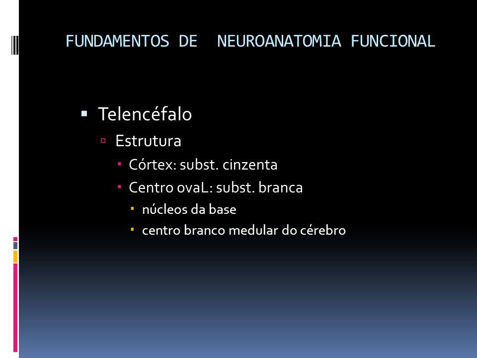 Telencéfalo Estrutura Córtex: subst. cinzenta Centro ovaL: subst. branca núcleos da base centro branco medular do cérebro