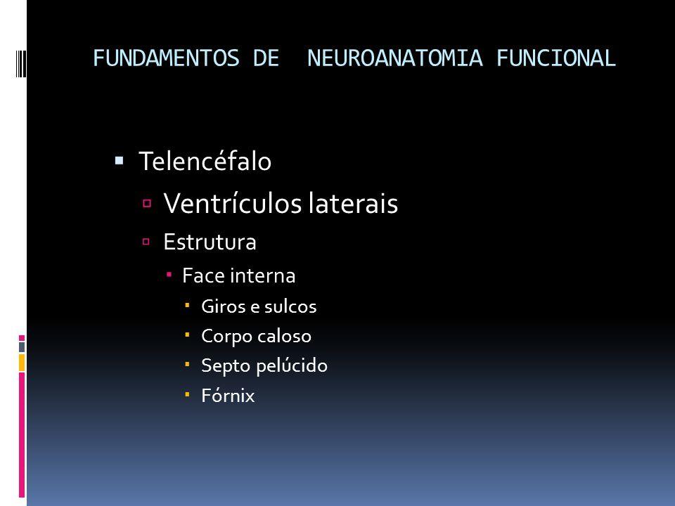 Telencéfalo Ventrículos laterais Estrutura Face interna Giros e sulcos Corpo caloso Septo pelúcido Fórnix