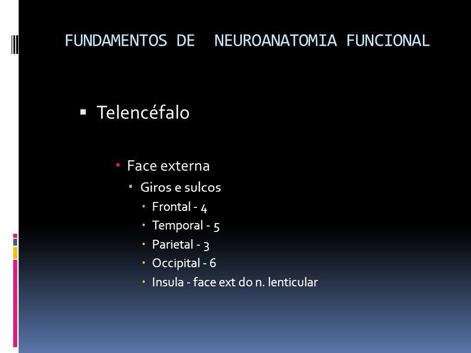 Telencéfalo Face externa Giros e sulcos Frontal - 4 Temporal - 5 Parietal - 3 Occipital - 6 Insula - face ext do n. lenticular