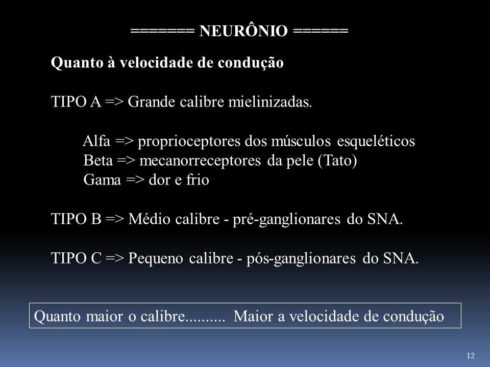 12 Quanto à velocidade de condução TIPO A => Grande calibre mielinizadas. Alfa => proprioceptores dos músculos esqueléticos Beta => mecanorreceptores